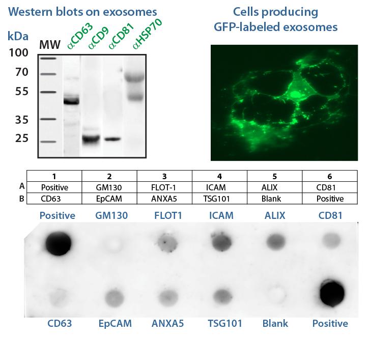 Exosome Training Course | System Biosciences