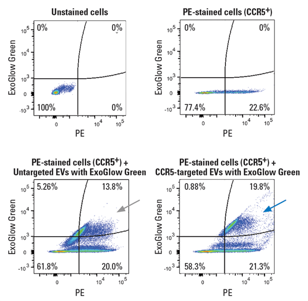 EVs engineered using XStamp Pro Streptavidin and biotinylated anti-CCR5 efficiently target CCR5+ cells and are internalized