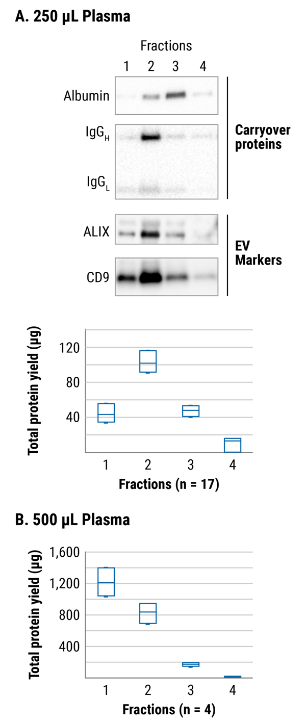 The majority of EVs elute in the first two fractions