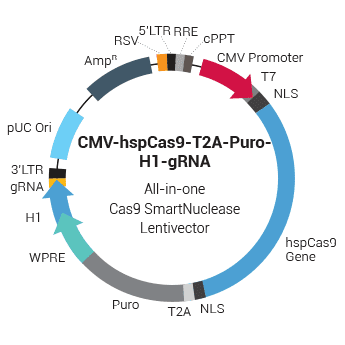 CMV-hspCas9-T2A-Puro-H1-gRNA All-in-one Cas9 SmartNuclease Lentivector