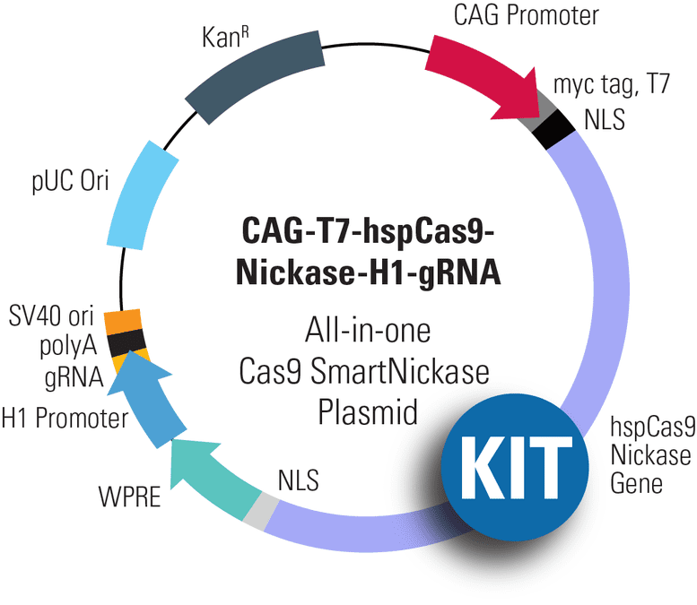 CAG-T7-hspCas9-H1-gRNA All-in-one Cas9 SmartNickase Plasmid