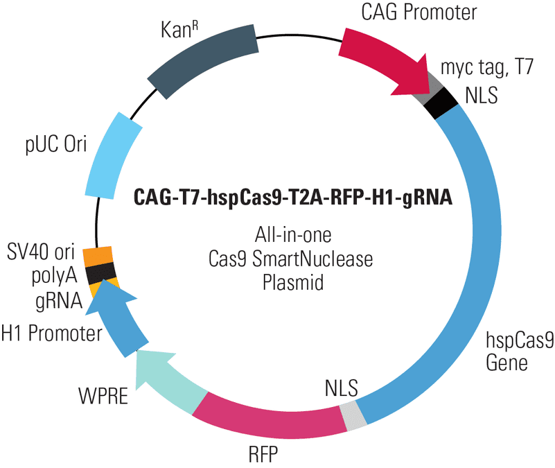 CAG-T7-hspCas9-T2A-RFP-H1-gRNA All-in-one Cas9 SmartNuclease Plasmid