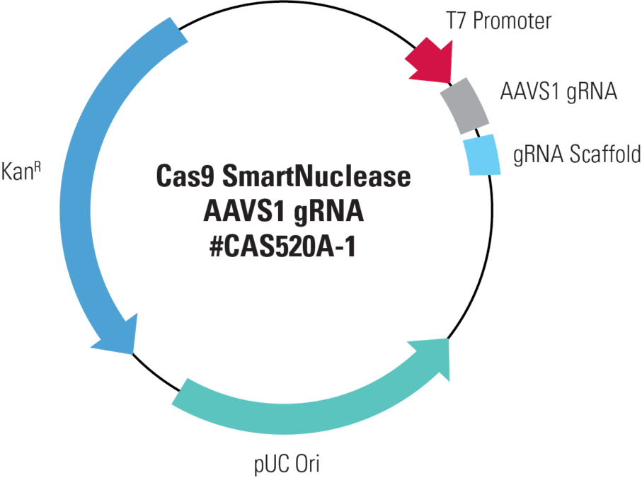Cas9 SmartNuclease AAVS1 gRNA, Transfection-ready