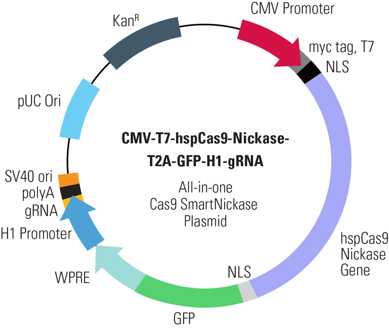 CMV-T7-hspCas9-Nickase-T2A-GFP-H1-gRNA All-in-one Cas9 SmartNickase Plasmid