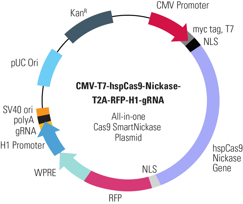 CMV-T7-hspCas9-Nickase-T2A-RFP-H1-gRNA All-in-one Cas9 SmartNickase Plasmid