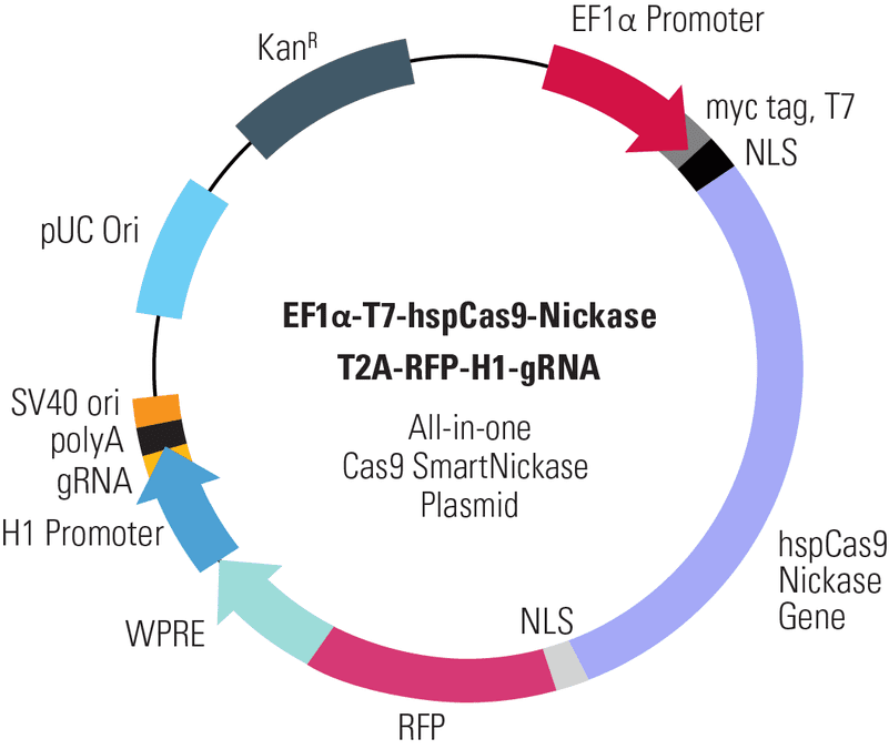EF1α-T7-hspCas9-Nickase-T2A-RFP-H1-gRNA All-in-one Cas9 SmartNickase Plasmid