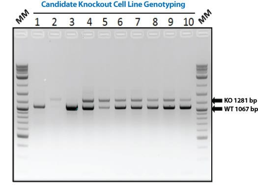 Ez Genotyping Kit System Biosciences