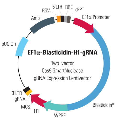 EF1α-Blasticidin-H1-gRNA Two Vector Cas9 SmartNuclease gRNA Expression Lentivector