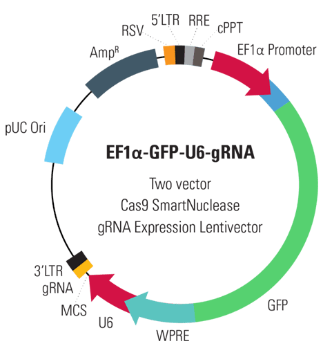 EF1α-GFP-U6-gRNA Two Vector Cas9 SmartNuclease gRNA Expression Lentivector