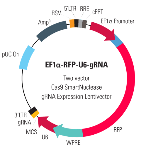 EF1α-RFP-U6-gRNA Two Vector Cas9 SmartNuclease gRNA Expression Lentivector