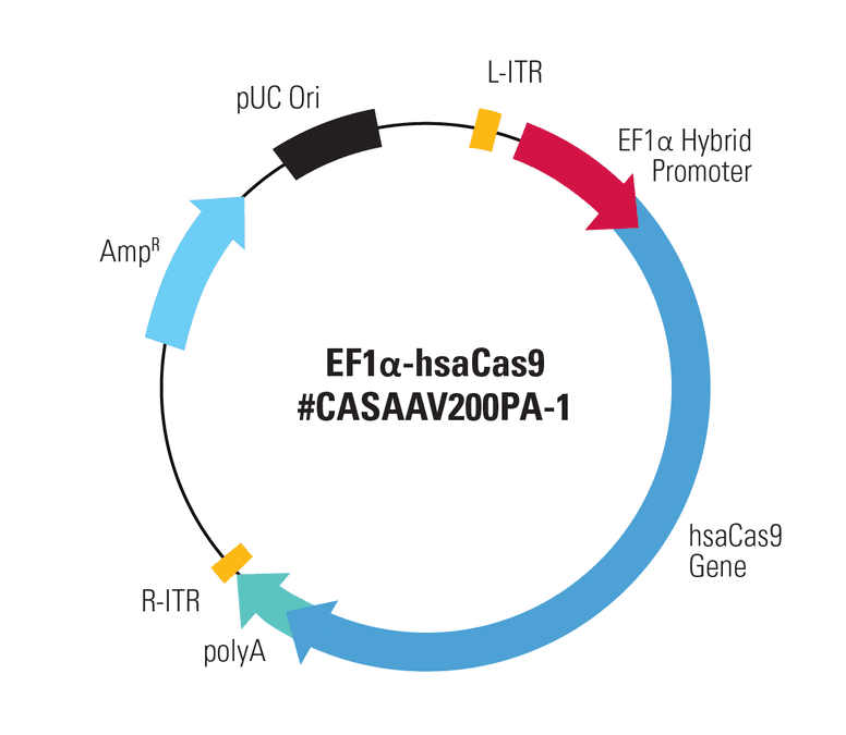 EF1α-hsaCas9 Two Vector AAV Cas9 SmartNuclease Expression Plasmid