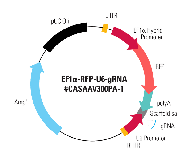 EF1α-RFP-U6-gRNA(SA) Two Vector AAV Cas9 SmartNuclease gRNA Expression Plasmid