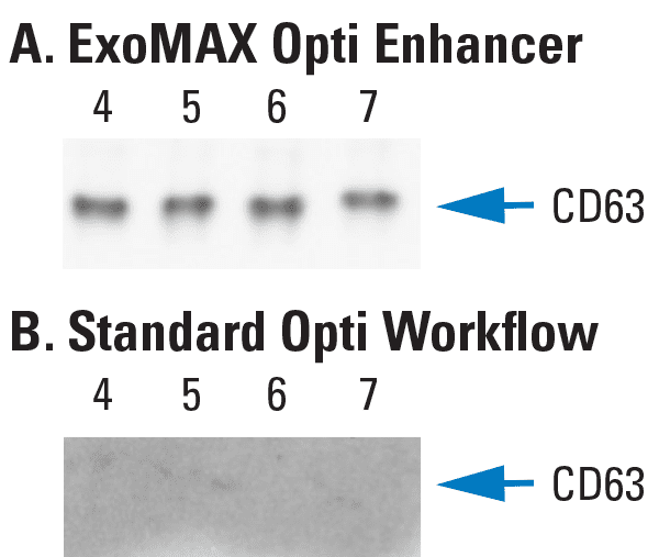 Higher yields of exosomes are obtained from OptiPrep-based ultracentrifugation when samples are prepared using ExoMAX Opti Enhancer compared to the conventional sample preparation workflow