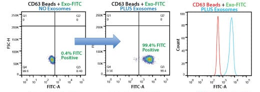 Highly selective exosome isolation by FACS using anti-CD63