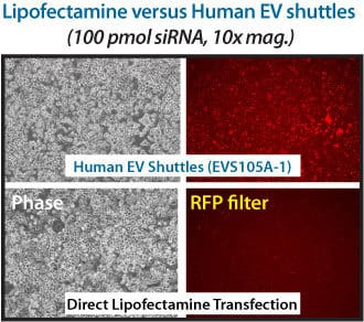 The EV Shuttle Kit is more efficient than lipofectamine