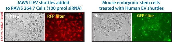 The EV Shuttle Kit efficiently delivers siRNA cargo even to hard-to-transfect cells.