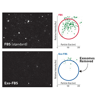 NanoSight shows low levels of exosomes in Exo-FBS