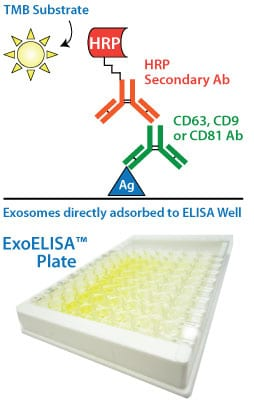 The ExoELISA assay uses a colorimetric, HRP activity-based readout using extra-sensitive TMB as the substrate.