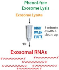 Efficient, phenol-free extraction of RNA from already-purified exosomes