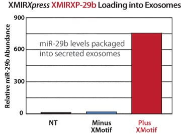 The XMotif in XMIRXpress directs miRNAs to exosomes
