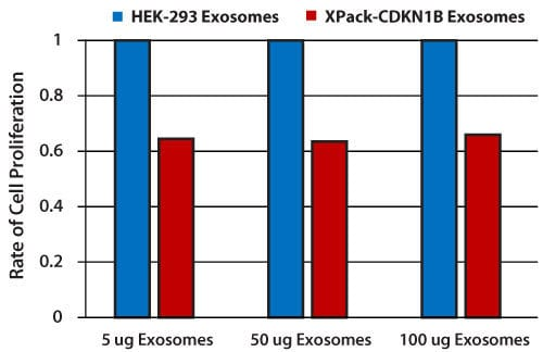 XPack-CDKN1B exosomes deliver functional protein to cells