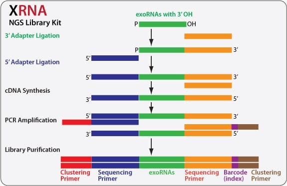 XRNA Kits are optimized for simplicity and reproducibility