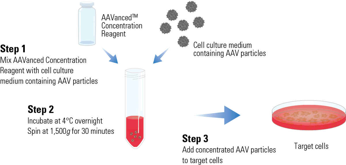 AAVanced Concentration Reagent delivers a streamlined workflow for easier gene therapy and other AAV projects