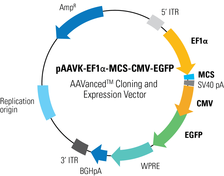 pAAVK-EF1α-MCS-CMV-EGFP AAVanced Cloning and Expression Vector