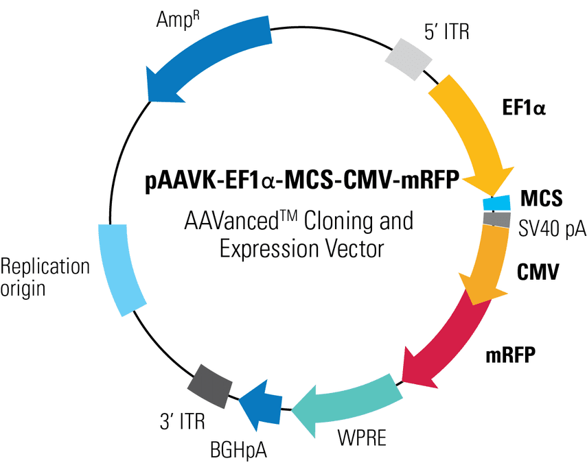 pAAVK-EF1α-MCS-CMV-mRFP AAVanced Cloning and Expression Vector