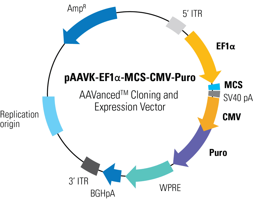 pAAVK-EF1α-MCS-CMV-Puro AAVanced Cloning and Expression Vector