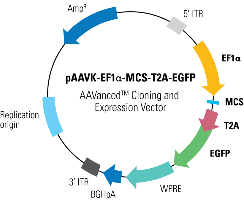 pAAVK-EF1α-MCS-T2A-EGFP AAVanced Cloning and Expression Vector