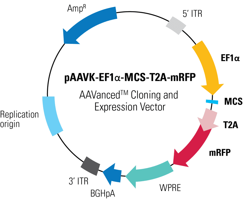 pAAVK-EF1α-MCS-T2A-mRFP AAVanced Cloning and Expression Vector