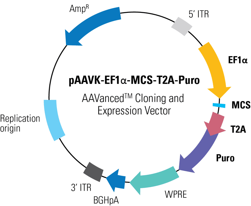 pAAVK-EF1α-MCS-T2A-Puro AAVanced Cloning and Expression Vector