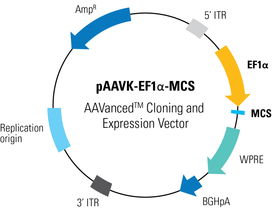pAAVK-EF1α -MCS AAVanced Cloning and Expression Vector