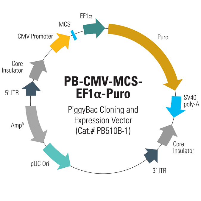 PB-CMV-MCS-EF1α-Puro PiggyBac cDNA Cloning and Expression Vector