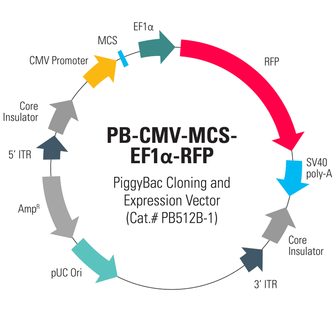 PB-CMV-MCS-EF1α-RFP PiggyBac cDNA Cloning and Expression Vector