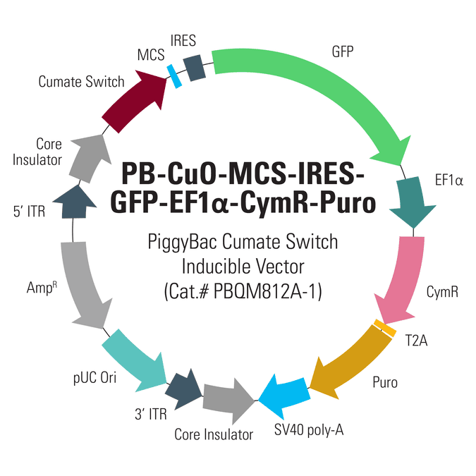 PB-Cuo-MCS-IRES-GFP-EF1α-CymR-Puro Inducible cDNA Cloning and Expression Vector