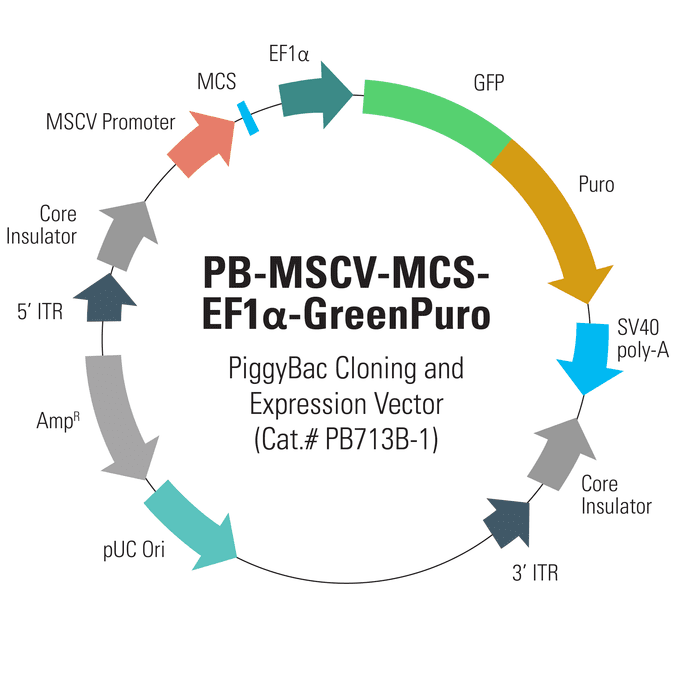 PB-MSCV-MCS-EF1α-GreenPuro PiggyBac cDNA Cloning and Expression Vector