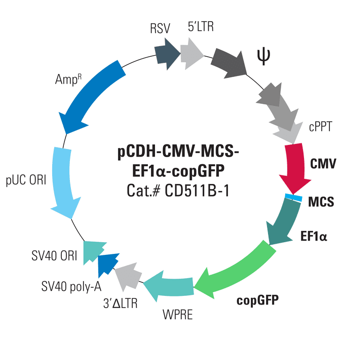 pCDH-CMV-MCS-EF1α-copGFP Cloning and Expression Lentivector