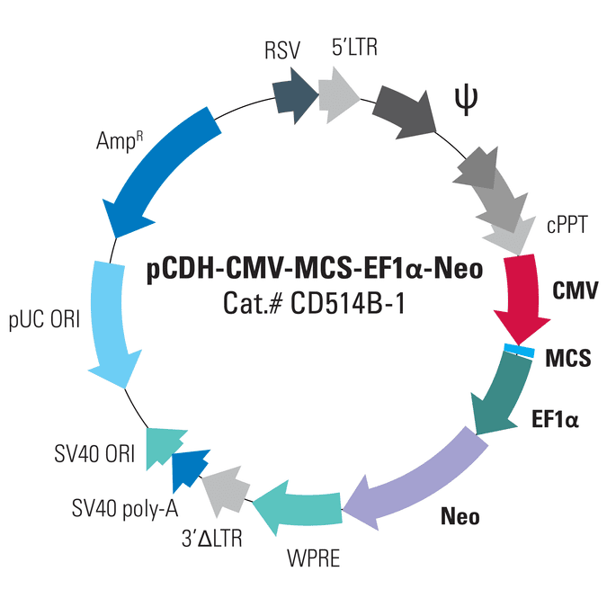 pCDH-CMV-MCS-EF1α-Neo Cloning and Expression Lentivector