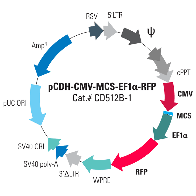 pCDH-CMV-MCS-EF1α-RFP Cloning and Expression Lentivector