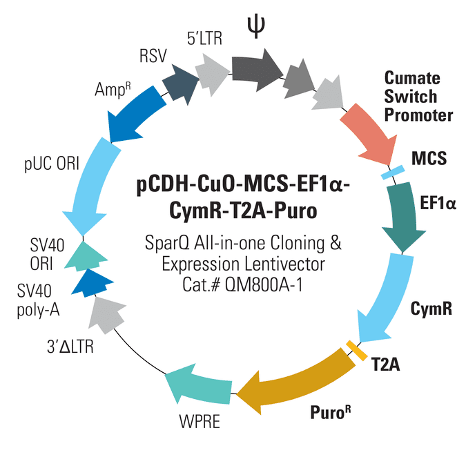 pCDH-CuO-MCS-EF1α-CymR-T2A-Puro SparQ All-in-one Cloning and Expression Lentivector