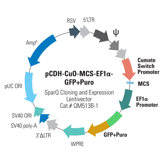 pCDH-CuO-MCS-EF1α-GFP+Puro SparQ Cloning and Expression Lentivector