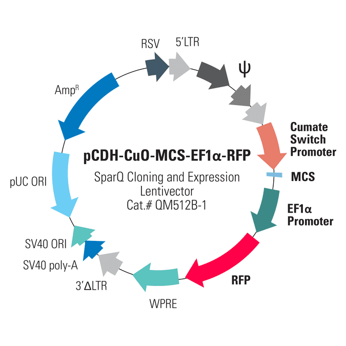 pCDH-CuO-MCS-EF1α-RFP SparQ Cloning and Expression Lentivector