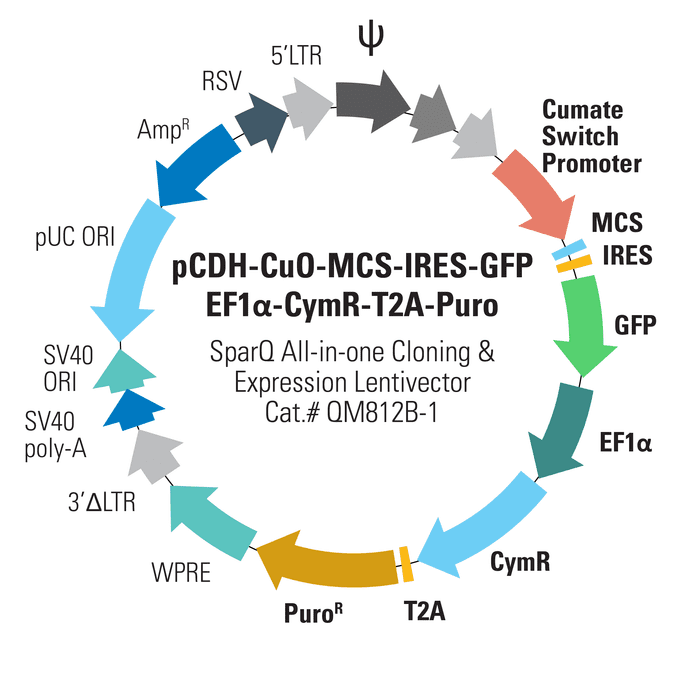 pCDH-CuO-MCS-IRES-GFP-EF1α-CymR-T2A-Puro SparQ All-in-one Cloning and Expression Lentivector