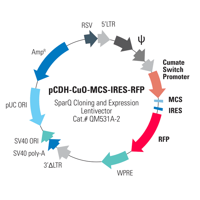 pCDH-CuO-MCS-IRES-RFP SparQ Cloning and Expression Lentivector