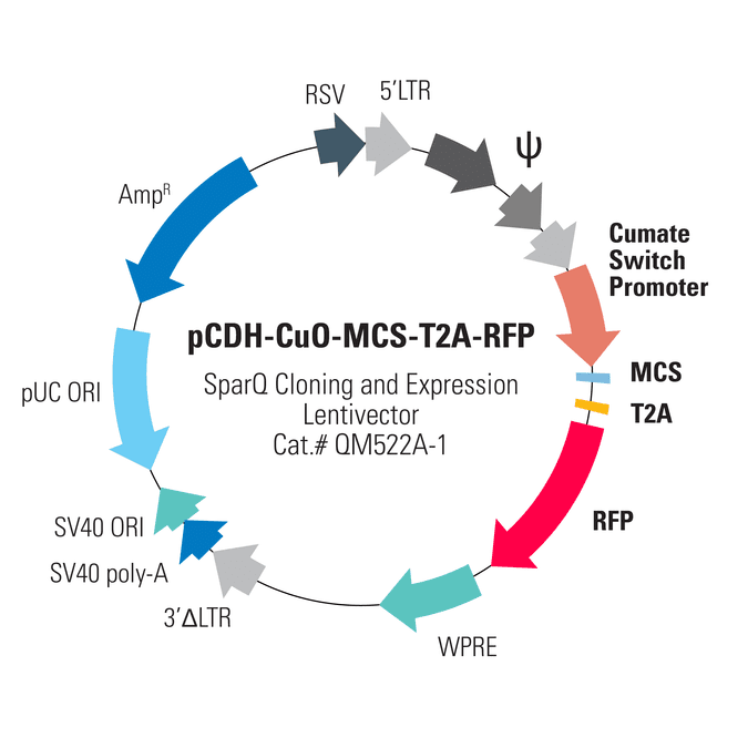 pCDH-CuO-MCS-T2A-RFP SparQ Cloning and Expression Lentivector