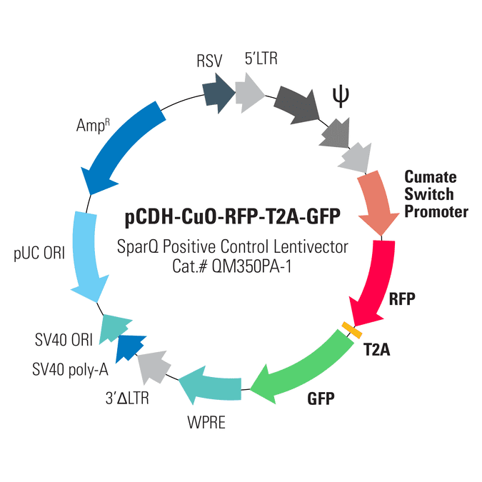 pCDH-CuO-RFP-T2A-GFP SparQ Positive Control Vector