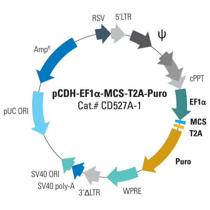 pCDH-EF1α-MCS-T2A-Puro Cloning and Expression Lentivector