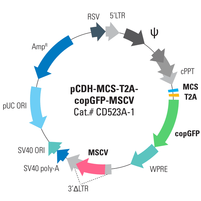 pCDH-MCS-T2A-copGFP-MSCV Cloning and Expression Lentivector